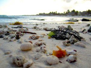 beach-1479411_1280