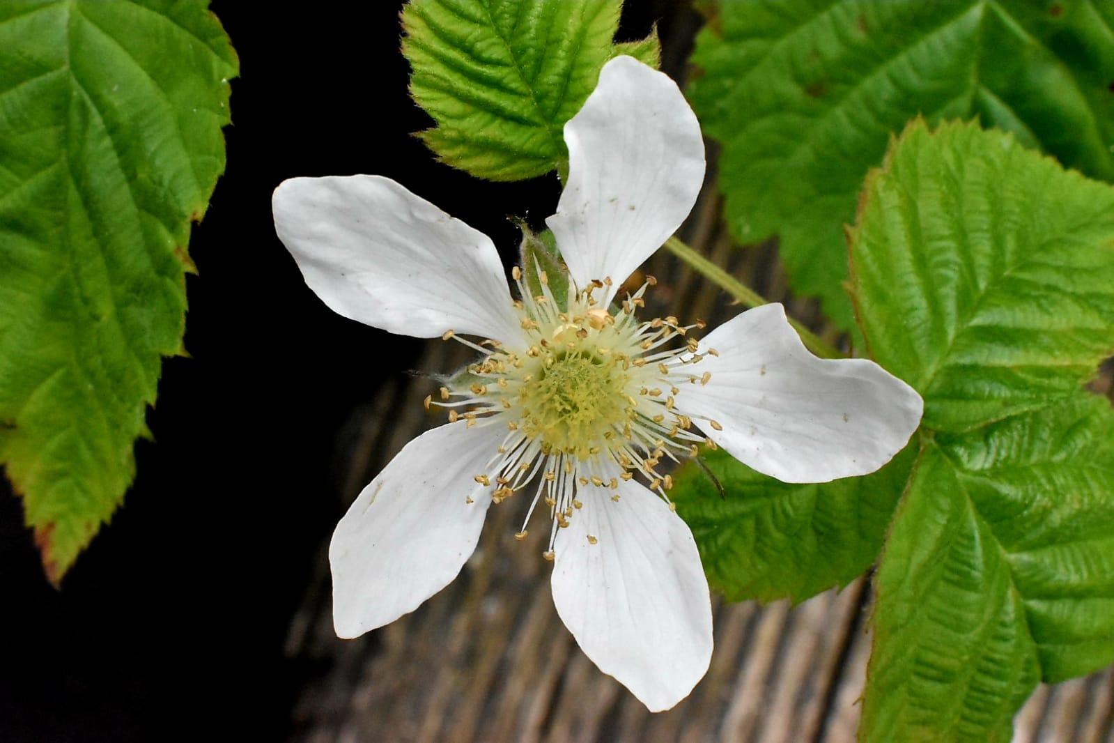 Flower Essence Workshops